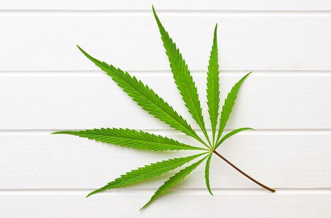 Légalisation cannabis - Impact sur cannabis médical