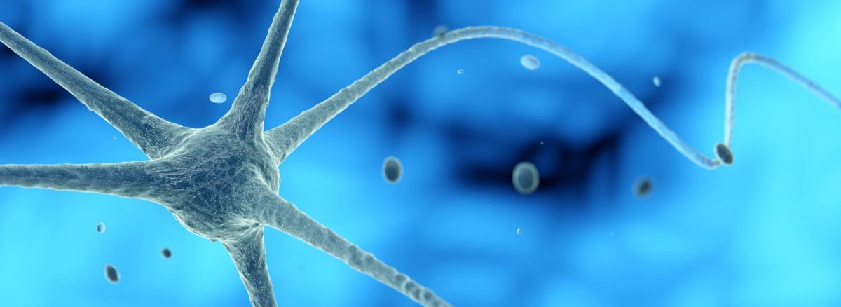 What is Neuroplasticity